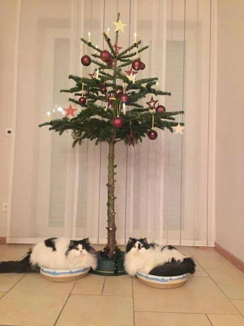 2112201614150476743 - How to Protect Your Christmas Tree from Pets - Lifestyle, Culture and Arts
