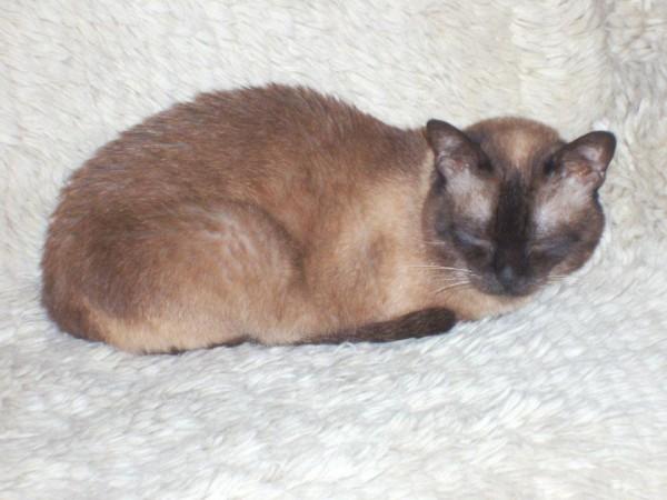 Резултат с изображение за джиджи ал котконе